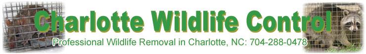 Charlotte Pest Amp Wildlife Control Rat Bat Bird